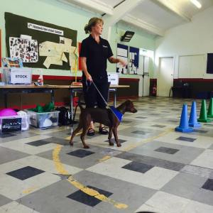 Reality Dog Training and Pet Behaviour Laura of London